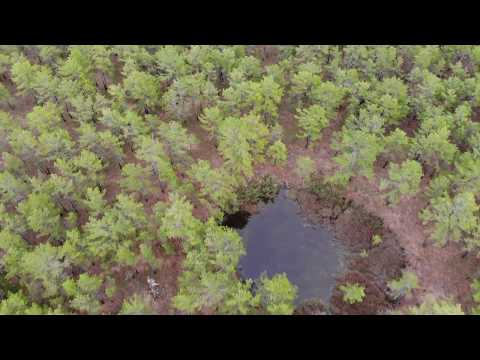 Mavic Air:  Drone uncovers mysterious hidden bodies of water in New Jersey Pine Barrens.