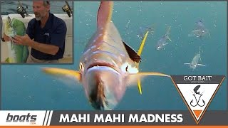 Got Bait? Mahi Madness Above and Underwater, Fish-cam Attacked!