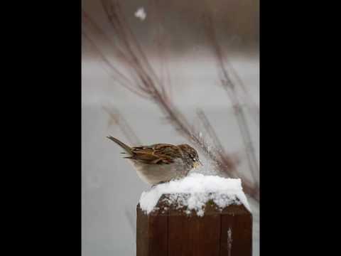 Download Val Doonican - Snowbird