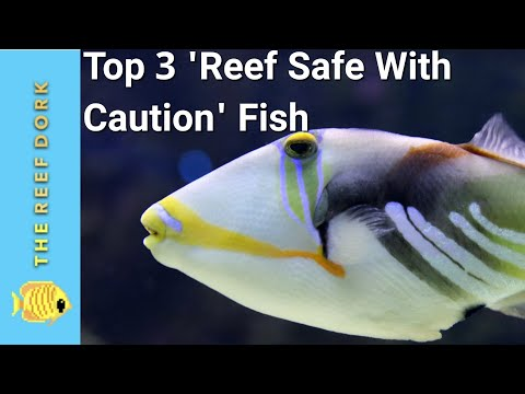 Top 3 'Reef Safe With Caution' Fish