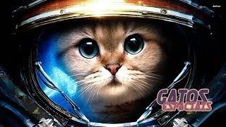 Gatos Espaciais | O Rei Rato (One Shot)