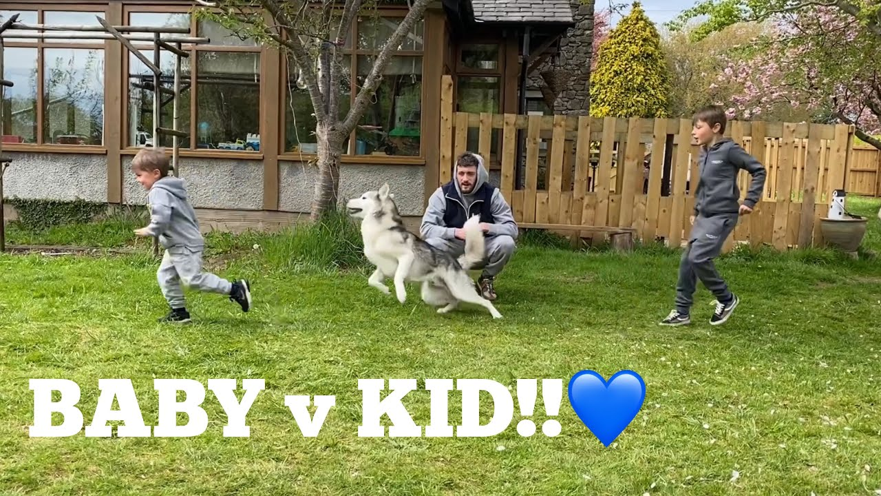 Which Kid Does My Huskies Love The Most Challenge!! [FUNNIEST REACTION!!]