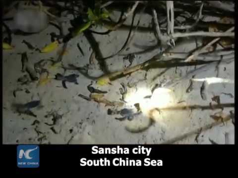 24933 rizne tiere New China Video captures sea turtle laying eggs in South China Sea
