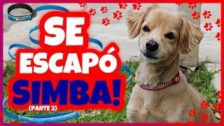 Daniel El Travieso - Mi Perro Se Escapó! (Parte 2)