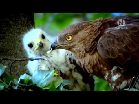 Дикие Балканы. The Wild Balkans