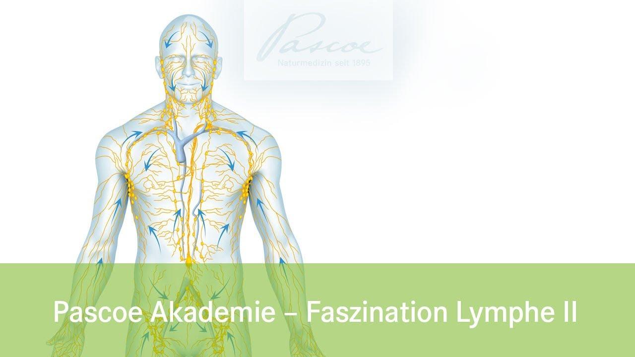Ungewöhnlich Karte Des Lymphatischen Systems Galerie - Anatomie ...