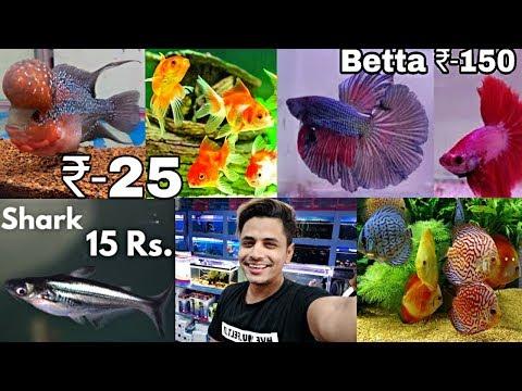 Fish Market In Hyderabad | Aquarium Fish Shop | Fish In Cheap Price | Shark, Gold Fish, Angel Fish