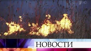 площадь лесных пожаров в России за сутки выросла в полтора раза