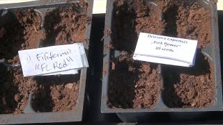 Growing carnivorous plants (growing from seed, transplanting and more)