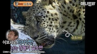 Leopard goes under anesthesia for treatment, but doesn't fall alseep? thumbnail