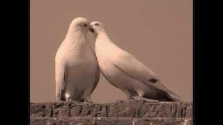 Coz I Love You (Agnes Monica)