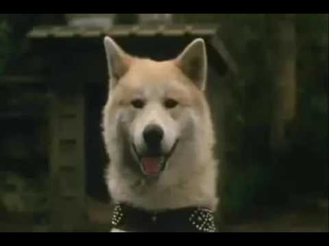 [How To Dog Care] The poor Hachiko dog story