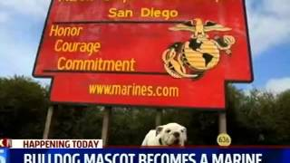 Kswb - Fox 5 - Bulldog Mascot Becomes A Marine