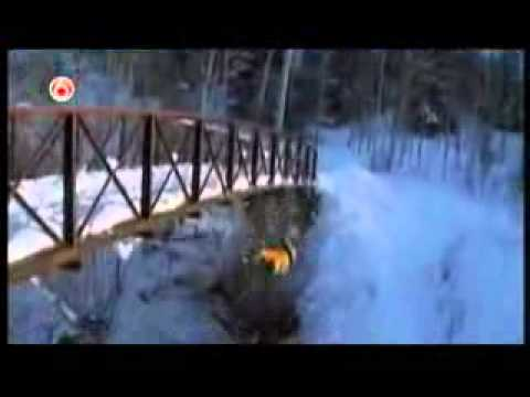 ★ BEST SNOW BLOOPERS Special # 1 Funniest Home Videos part 207