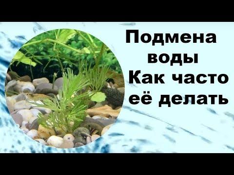 Подмена воды в аквариуме и как часто ее делать?