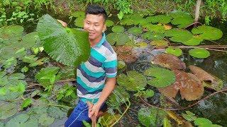 Cá Bóp nấu lẩu nhúng với cả vườn rau. Bắt Vạn Nguyễn lội mương hái rau luôn