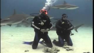 Video Bahamas Shark Diving download MP3, 3GP, MP4, WEBM, AVI, FLV Agustus 2018