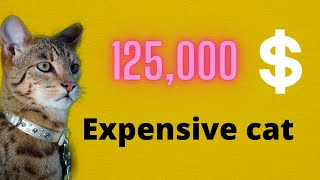 Most Expensive Cats In The World 2020 | TOP 10 EXPENSIVE CAT BREEDS IN THE WORLD | EXOTIC CATS