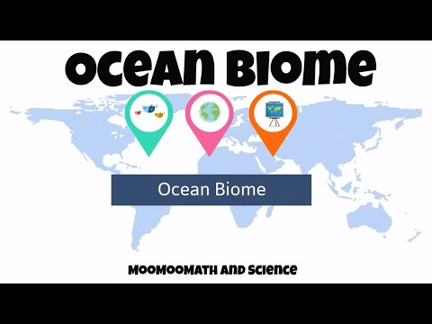 The Ocean Biome