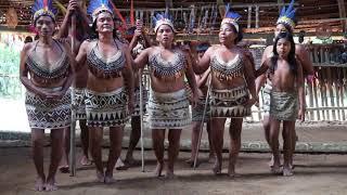 Video Viaje a Iquitos - Tribu de los Boras download MP3, 3GP, MP4, WEBM, AVI, FLV Agustus 2018