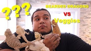 How To Get Your Bearded Dragon To Eat It's Veggies !! 2019