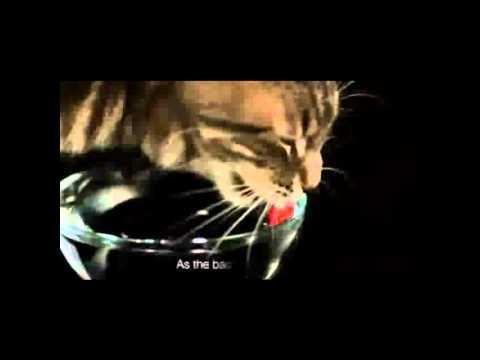 Как кошки пьют воду замедленная съемка