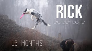 Rick Border Collie, 18 months  .: Tricks, Frisbee & Fun :.