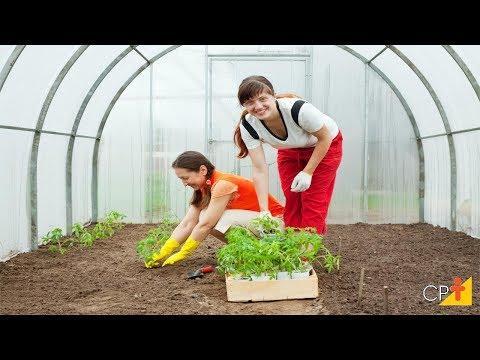 Clique e veja o vídeo Curso Produção de Tomate para Indústria - Manejo Integrado de Plantas Daninhas - Cursos CPT