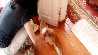 Эпилепсия у кота