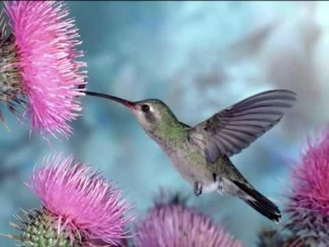 Bonitas imagenes de aves y flores con musica para - Fotos de flores bonitas ...