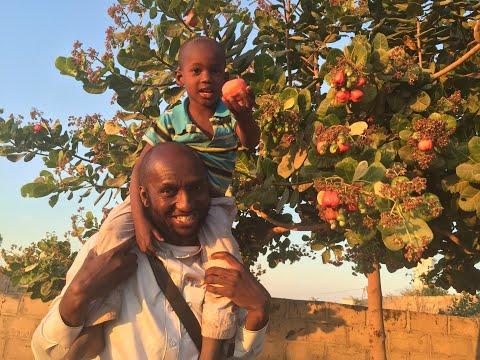made---sadaqa-jariya---récolte-du-puits-et-verger-amana