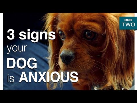 3 signs your dog is anxious - Trust Me, I'm A Vet: Episode 3 - BBC Two