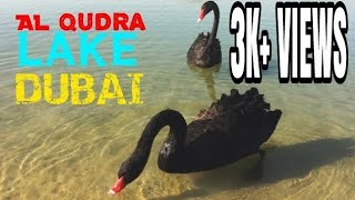AL QUDRA LAKE DUBAI | Places to visit in Dubai