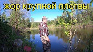 Рыбалка на крупную плотву в мае 2021 вечерний клёв на реке