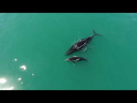 Moreton Bay - Whale Watching