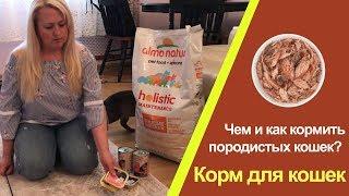 Как кормить кошек?