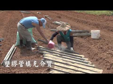 山藥種薯處理技術