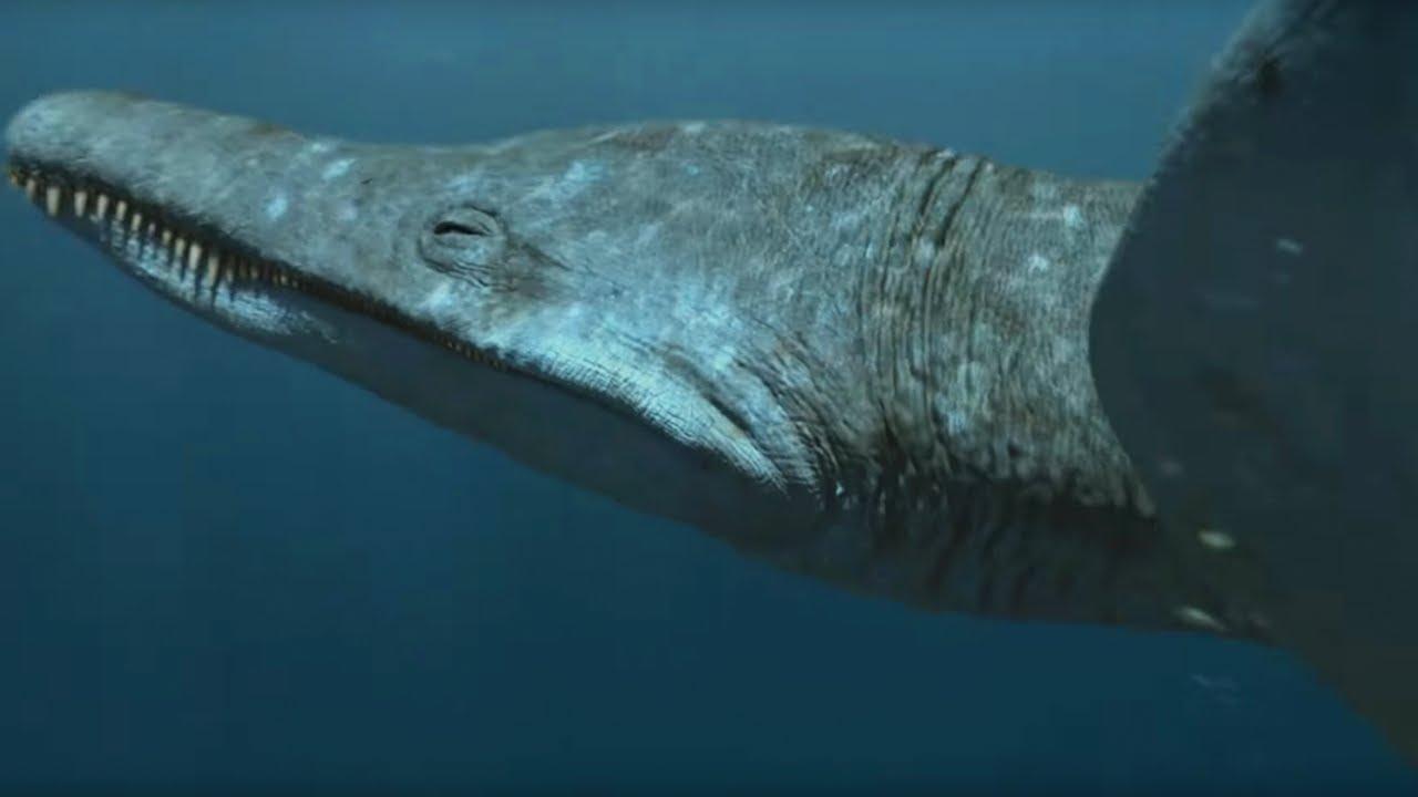 фото самых больших хищников онлайн!Для