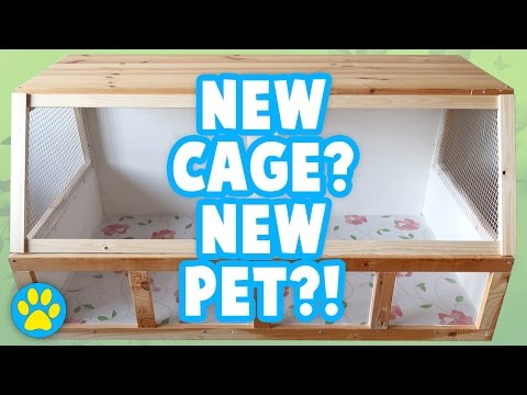 DIY Wood Hamster Cage | Building The Bunsen 1069sq inches [1/3]
