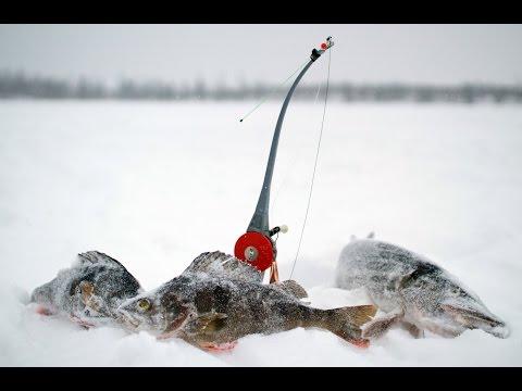 рыбалка в новом уренгое прогноз
