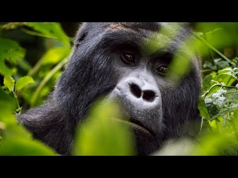 Uganda Travel Video 2016 With DJI Osmo And Canon 5D Mark III