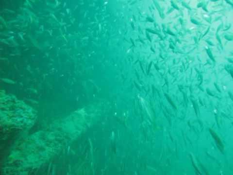 Sheridan Tug Dive - September 12 2009 Tanks-A-Lot Dive Charters