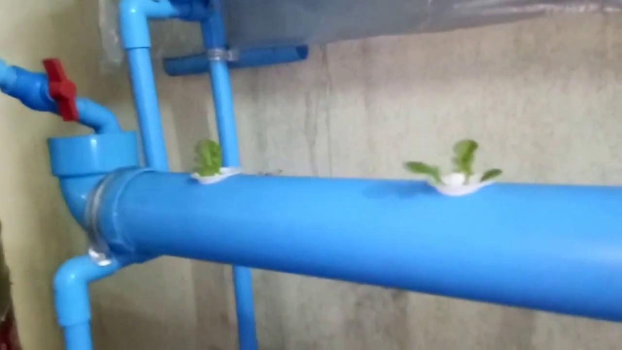 แปลงผักไฮโดรโปนิกส์ ทำเอง drft  ในท่อpvc แบบคอนโด