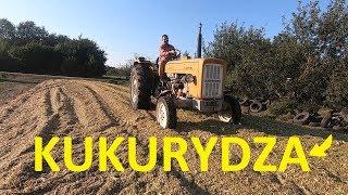Akcja Kukurydza 2019 /Kiszonka/ Moja C-360 zagęszcza