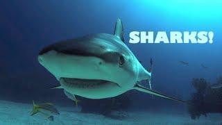 Zapętlaj MERMAID MINUTE #10: Caribbean Reef Sharks! Cristina Zenato, Shark Dancer, does Tonic Immobility | Mermaid Linden