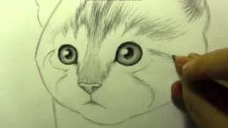 как научится рисовать    кошку