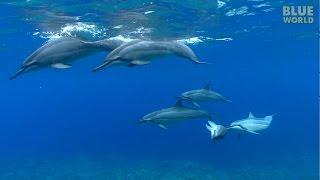 Hawaiian Spinner Dolphins   JONATHAN BIRD
