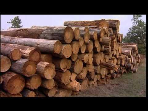 Forêt : politiques de territoires et Safer