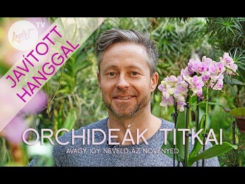 Download Az orchidea virágzás titka - javított hanggal