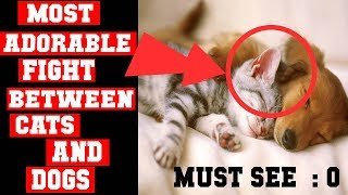 MUST SEE: Funny Cats and DOG Fighting Compilation -BEST AND Most cutest ever